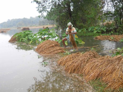 Standing-paddy-crop-badly-hit-by-flood